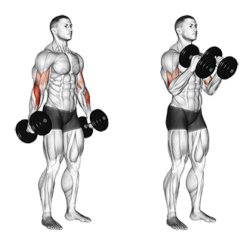 Dumbbells for Home Use - Hammer Curls